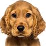 92_puppy_sale.jpg
